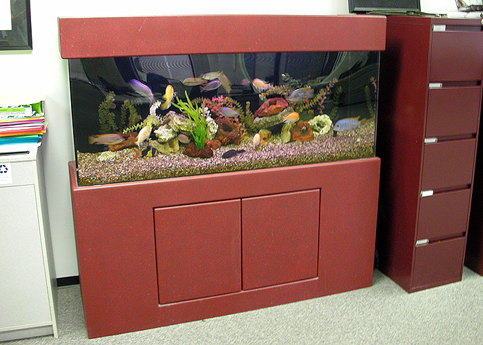 Professional and Experienced Aquarium Design and Maintenance for